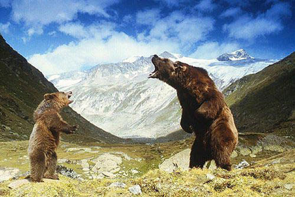Medveď (1988)