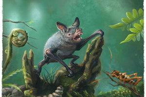 Hrabavý netopier Mystacina robusta, príbuzný novonájdeneho Vulcanops jennyworthya. M. robusta vyhynul iba v minulom storočí.