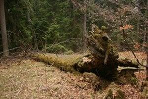 Na Poľane sa stromy stínať nemajú.