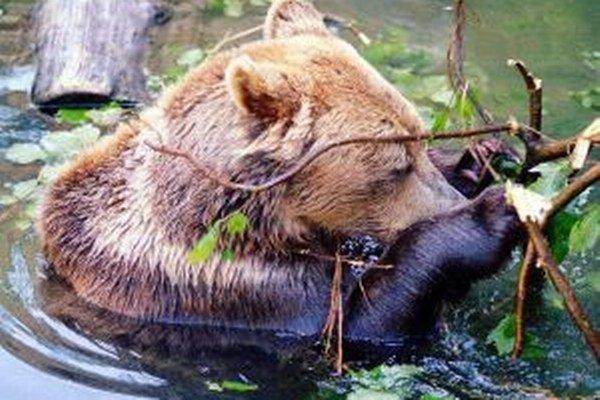 Zvieratá v horúčavách hľadajú ochladenie vo vode