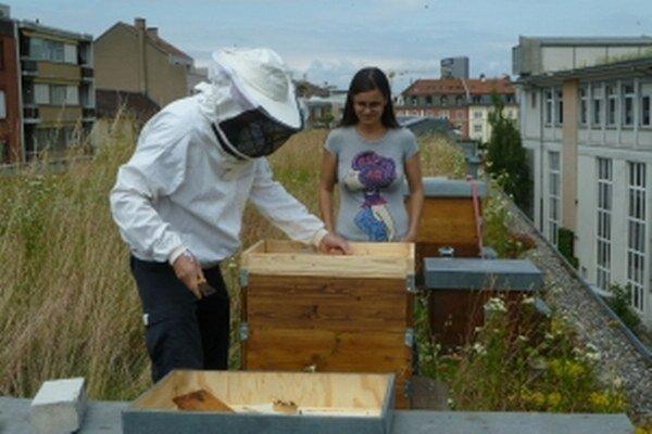 Projekt mestských včiel sa ujal aj vo švajčiarskom meste Bazilej.