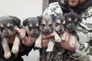 4 fenočky a 1 psík hľadajú nových záujemcov. Adopcia bude možná až po absolvovaní očkovania. Psíkovia budu asi stredného vzrastu. Sú živé a budú potrebovať aktívnych majiteľov. Sú vhodné k deťom. Odporúčame vyslovene do tepla - na byt alebo dom. Majú asi 1 mesiac. Papajú samostatne. Ak máte záujem o adopciu, kontaktujte útulok.