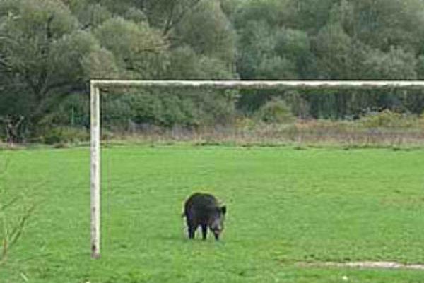 Diviak v bránke na futbalovom ihrisku.