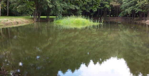 Jazierko v parku pred vypustením vody.