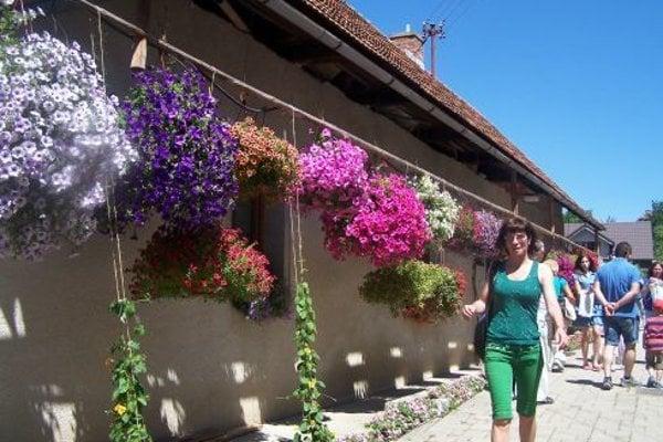 Kvet Podhradia.