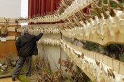 Levické poľovnícke dni budú 27. - 29. apríla.
