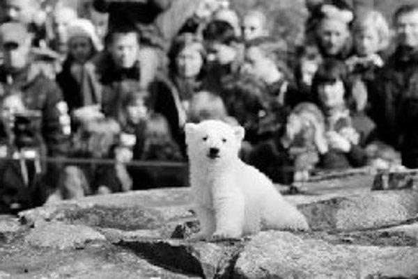 Prečo sa z berlínskeho ľadového medvedíka Knuta mohla stať taká mediálna udalosť?