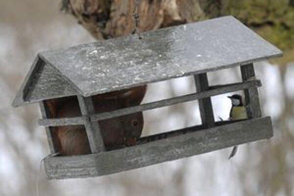Napospas veveričkám.