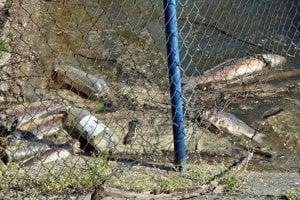 V nádrži Lipovina v Bátovciach sú uhynuté ryby.
