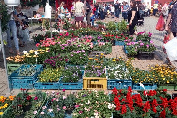 Sološnica ožila kvetmi i zvieratkami.