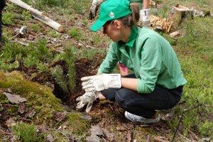 Dobrovoľníci vysadili vo štvrtok dopoludnia v jednej z dolín Nízkych Tatier, situovanej neďaleko liptovskej obce Malužiná, 8000 nových stromčekov.