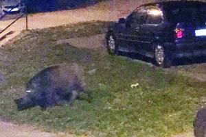 V noci zo štvrtka na piatok ich odfotili na Krosnianskej.