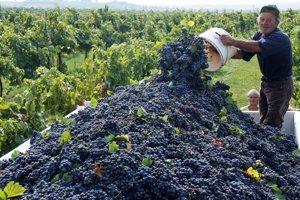 Na území Slovenska má vinohradníctvo dlhoročnú tradíciu.