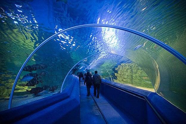 Podvodný tunel v Turkuazoo meria 80 metrov.