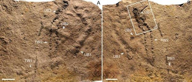 Skamenené stopy, ktoré čínski výskumníci objavili v údolí rieky Jang-c'-ťiang.