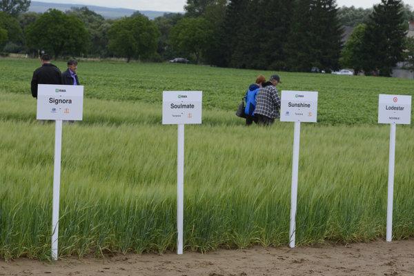 Na snímke pole s jednotlivými odrodami jačmeňa.