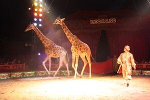 Žirafy - matka s dcérou v jednom z predstavení.