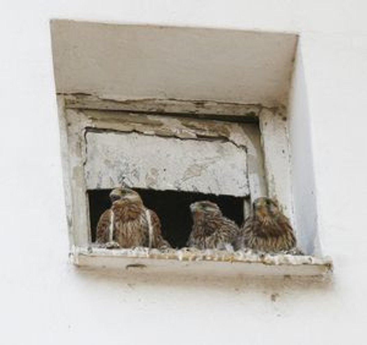 mladé dievčatá s veľkými vtákmi