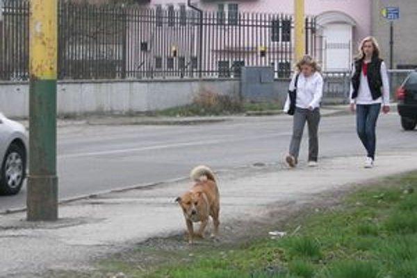 Túlavých psov v Žiline stretnete bežne.