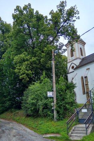 Staručká lipa pri kostole v Bodiciach.
