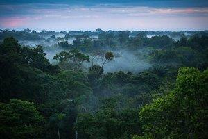 Čaasť Amazónskeho pralesa medzi Brazíliou a Peru.