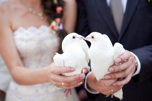 Keď si holubica nájde partnera, ostáva mu verná po celý život.