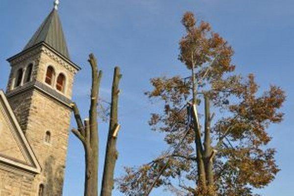 Stromy podstúpili omladzujúcu kúru.