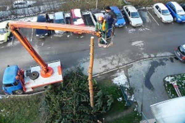 Pílenie stromu na Nemocničnej ulici.