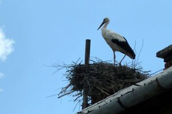 Doma na streche pošty v centre obce.