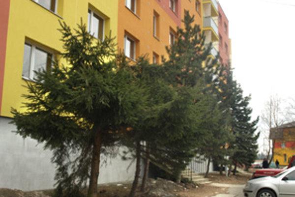 Ľudia bývajúci na prvom poschodí si veľa slnka pre vysoké stromy neužijú. Niektorí problém vyriešili po svojom – časť stromov spílili.