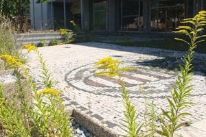 Invázne rastliny bujnejú aj v širšom centre.