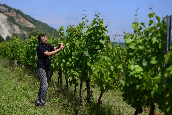 Brekovské vinohrady.