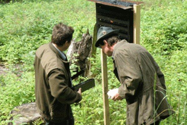 Kontrola lapačov s naleteným hmyzom.