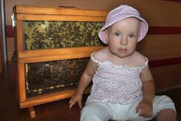 Dnes konštruktéri zostavia akýkoľvek včelí úľ. Novinkou je tento sklenený, v ktorom vidno prácu včiel.