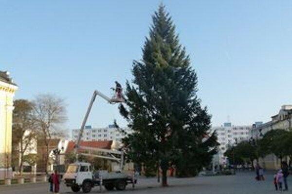 Vianočný stromček pochádza zo sídliska F.