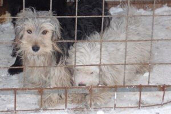 Zvieratá zostali po zásahu polície v dome niekoľko hodín samé.