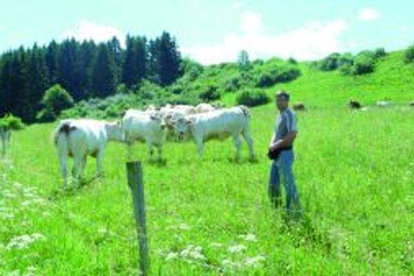 Jalovice mliekového a mäsového typu bude družstvo spásať spoločne.