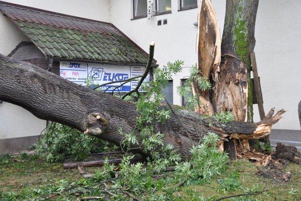 Starý strom na Aleji slobody preťalo na niekoľko častí.