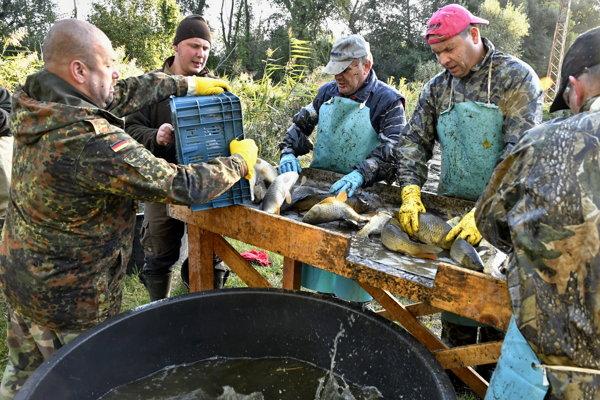 Kaprov vylovili, roztriedili a presunuli do lovných rybníkov.
