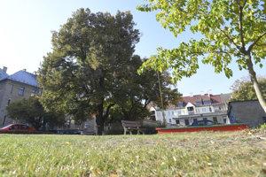 Živým pamätníkom obdobia prvej Československej republiky v Košiciach je strom stojaci v Starom Meste v oblasti bytových domov zvaných Malá Praha. V 20. rokoch minulého storočia ich tam postavili pre českých prisťahovalcov.