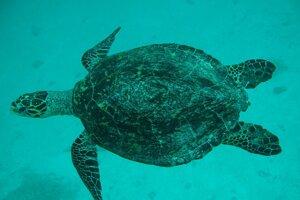 Na Maledivách je obľúbené aj šnorchlovanie. Plytčiny sú plné morských živočíchov.