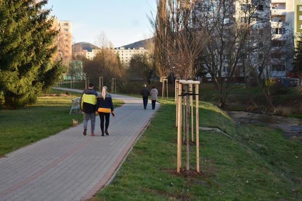 Nové stromy popri Domanižanke.