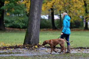 Rekodifikácia jasnejšie povie, kto je zodpovedný, keď pes niekoho pohryzie či zničí majetok.