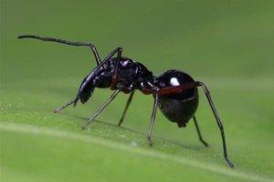Pavúk druhu toxeus magnus.