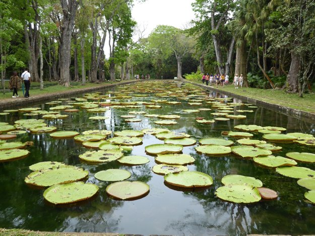 Botanická záhrada Pamplemousses, Maurícius.