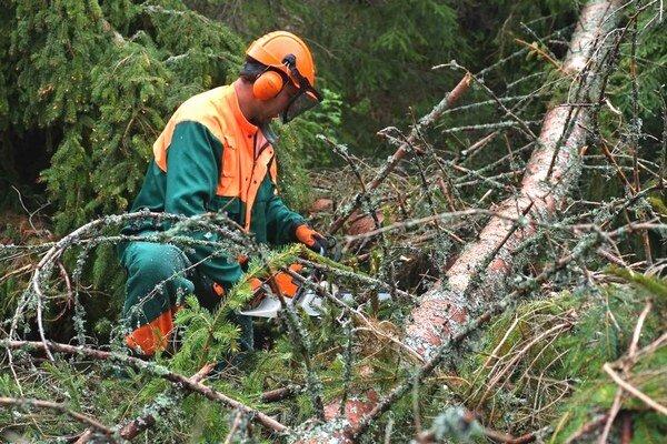 Práce v kalamitou zničených lesoch je až-až.