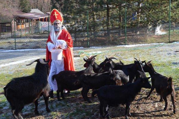 Vianočne vyzdobená zoo čaká na návštevníkov.