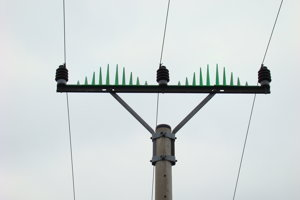 Lil biele mláďatá veľké čierne vtáky veľký veľký čierny kohút