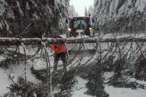 Spadnutý strom pred hraničným prechodom v Novoti.