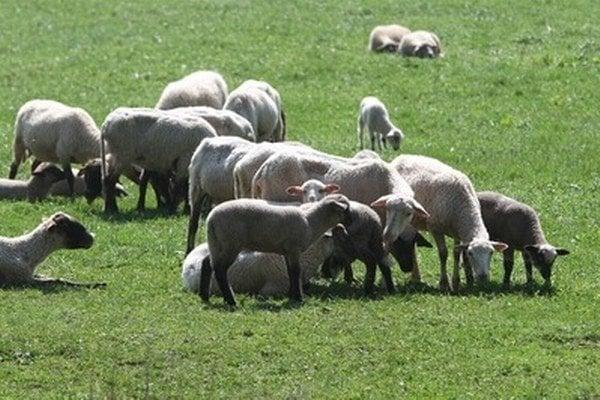 Hlavný veterinárny lekár odporúča pred kúpou výrobkov alebo pred konzumáciou jedál zo surového ovčieho a kozieho mlieka vyžiadať si potvrdenie, že mlieko, ktoré používajú, je laboratórne vyšetrené.
